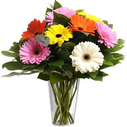 Attractive Mixed Gerberas in a Glass Vase