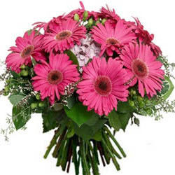 Appealing Bunch of Pink Gerberas