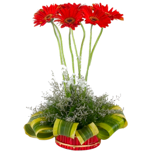 Heavenly 7 Gerberas of Designer Arrangement with Festive of Joy