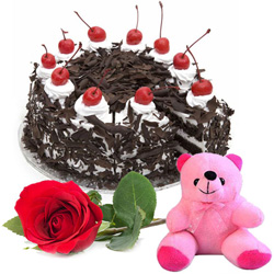 Radiant Rose with Teddy and Black Forest Cake