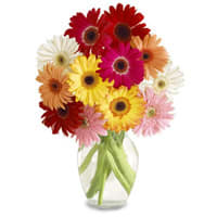 Eye-Catching Mixed Arrangement of 15 Gerberas