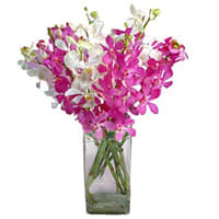 Attractive Gift of Orchids in Vase