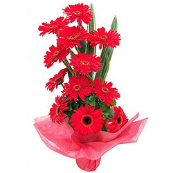 Silky Smooth Bouquet of Red Gerberas