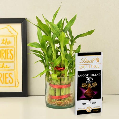 Wonderful 2 Tier Lucky Bamboo Plant with Lindt Excellence Chocolate