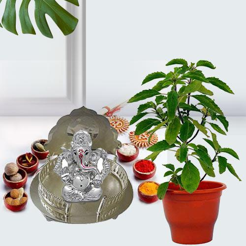 Go Green Holi Tulsi Plant with Puja Gift Hamper